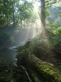 Light in the Woods by Yoshi Shimamura