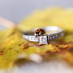 """@cassidymister  #cassidyMRphotography """"You can now call me the ladybug whisperer! Ladybugs were flying all around us at Maribeth + James engagement session. They are said to bring good luck.…"""""""