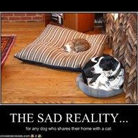 THE SAD REALITY...for any dog who shares their home with a cat.