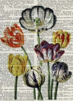 tulips - vintage tulip artwork printed on page from old dictionary. $12.00, via Etsy.
