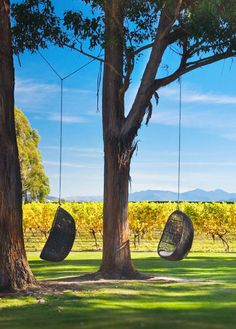 The Cloudy Bay estate in New Zealand produces exceptional wines that reflect the terroir from which they originate – LVMH