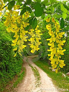 Country road in springtime. Let's take a walk...bet we can smell honeysuckle right around the corner.