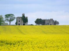 crops at the castle Sports Complex, Castle Ruins, Dublin, Monument Valley, Ireland, Explore, Travel, Viajes, Destinations