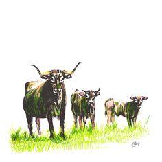 De mayor, quiero ser una vaca tudanca