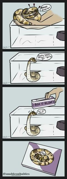 Snakes are so silly. I wonder if my ball python will be like this when she gets bigger.
