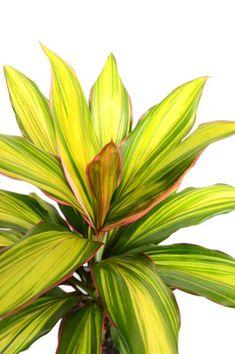 Plants Tropical foliage