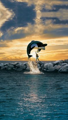 Free Willy poster, t-shirt, mouse pad Keiko Orca, Famous Movie Posters, Famous Movies, Whale Pictures, Animals Beautiful, Cute Animals, Wale, Large Canvas Prints, Ocean Creatures