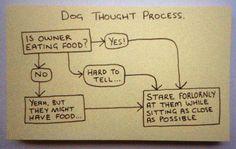 #dog thought process