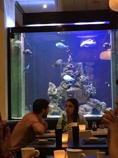 Subenshi Aquarium!
