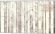 Birch Trees on White Fine-Art Print