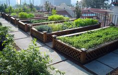 Rooftop Garden Design Ideas you can Try ! - My rooftop garden Urban Agriculture, Urban Farming, Herb Garden, Garden Beds, Garden Plants, Tomato Garden, Easy Garden, Organic Gardening, Gardening Tips