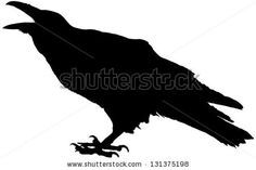 Crow Stock Photos, Images, & Pictures   Shutterstock