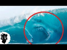 5 Megalodons Caught on Camera & Spotted In Real Life! Shark In The Ocean, Big Shark, Shark Pictures, Shark Photos, Underwater Creatures, Ocean Creatures, Strange Creatures, Snorkeling, Fantasy
