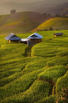 Rice terraces, Chiang Mai, Thailand