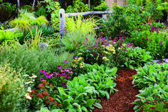 Now that Governor Brown has issued the first-ever statewide mandates on water use, many of us are looking at our gardens...