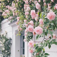 Fond Design, Floral Design, Flower Pictures, Pretty Pictures, Pink Flowers, Beautiful Flowers, Flower Aesthetic, Aesthetic Pictures, Rose Buds