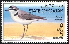 Kentish Plover stamps - mainly images - gallery format