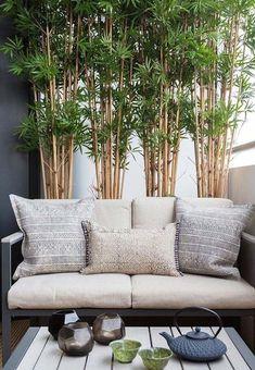 Canteiro de bambus na sala