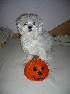 El perrito de Iraida. Vótalo o participa tú también: https://basicfront.easypromosapp.com/p/122526