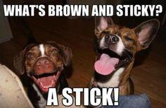 dog humor!