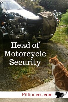 Nothing gets by Hector the ginger motorcycle cat! Cat Love, Biker, Motorcycles, Fur, Cats, Girls, Gatos, Little Girls, Kitty Cats