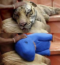 #LifeOfPi with & without CGI. It's hard to tell which is which...