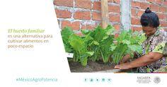 El huerto familiar es una alternativa para cultivar alimentos en poco espacio. SAGARPA SAGARPAMX #MéxicoAgroPotencia