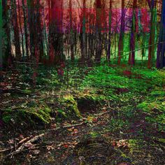 Forest morning colour