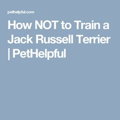How NOT to Train a Jack Russell Terrier | PetHelpful