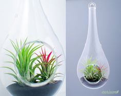 Items similar to Unique Airplant Terrarium - Handblown Glass made in EU on Etsy