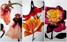 Irving Penn Flowers