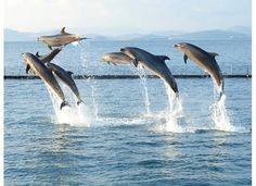 Dolphins in Subic Bay