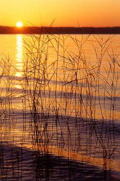 Wasserspiegelung bei Sonnenuntergang, Starnberger See, Bayern, Deutschland