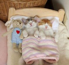 So sweet! Kittens / kitty cats sleeping in a bed animal photography pictures and photos / #cats ❤️❤️