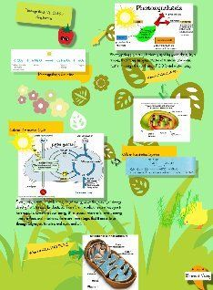 Craft Poster Explaining Aerobic Respiration