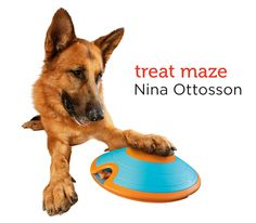 Challenge your dog to a treat maze from Petco's Holiday Gift Guide.