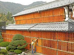 軒下連なる柿のカーテン 岐阜・山県市で天日干し