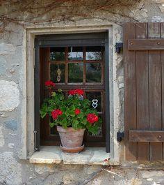 geranios y malvones en la ventana