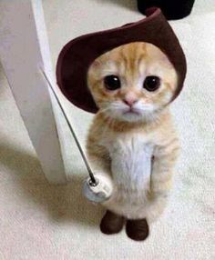 Puss in boots!!!!!!!!!