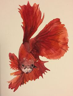 watercolor betta fish 2015. Prints are available upon request! $15-20 depending on shipping cost