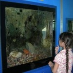 Chula Vista Nature Center 4- Things to do in San Diego with kids!