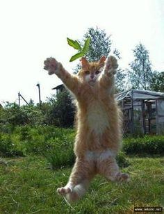 #cat #funny #cute