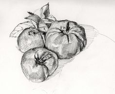 Tomatoes Sketch
