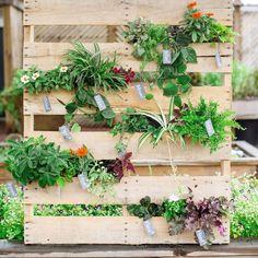 Mur végétal réalisé à partir de palettes