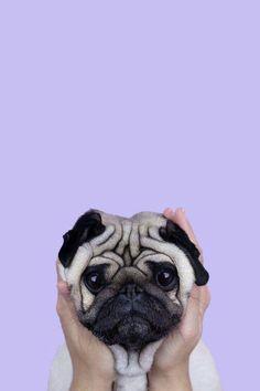 Cute-Puppy-Pug-iPhone-Wallpaper-iphoneswallpapers_com. - Cute Puppy Pug iPhone Wallpaper iphoneswallpapers_com. Puppy Wallpaper Iphone, Dog Wallpaper Iphone, Cute Dog Wallpaper, Animal Wallpaper, Dog Lockscreen, Colorful Wallpaper, Puppies Wallpaper, Plain Wallpaper, Beautiful Wallpaper