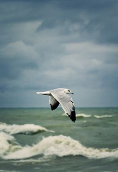 1.Once upon a Time there was a young Seagull living on a beautiful white beach, close to a river at the end of its path into the sea. This young seagull loved to fly over the waves, proud to be a seagull, proud to be free, proud of his name that was  Basileus -continue in the next pin -->>