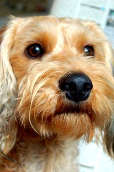 The Real Reasons Your Dog Won't Stop Barking — and How to Fix It