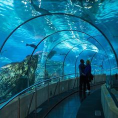 A nice place to go Aquarium Barcelona, it's quite smaller than its advertised but still kinda worth it.😋 Barcelona Spain 🇪🇸 #amobarcelona #the_wandering_tourist #tv_landscape #awesome_phototrip #landscape #heavenly_shotz  #travelpictures_world #wandering_around_world #world_besttravel #hola_m #vip_world_photo #igworldclub_hdri #catalunyagrafias #bns_europe #l4l #photocontestgr #thecatalanist #Magical_shotz #ig_bestphotos #topBarcelonaPhoto ...