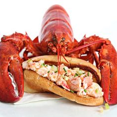 Lobster rolls...and lessons on cooking live lobster