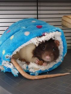Cute Animal Memes, Cute Animal Pictures, Cute Animals, Cute Rats, Cute Hamsters, Hamster Life, Fancy Rat, Cute Mouse, Happy Baby